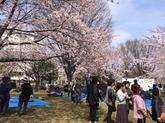 28年4月川里さくら祭①.JPG
