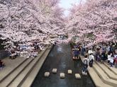 28年4月川里さくら祭②.JPG