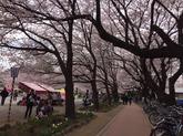 28年㋃鴻巣さくら祭①.JPG