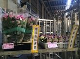 28年12月 花の冬季品評会②.JPG