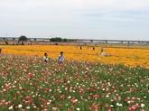③29花まつり.JPG