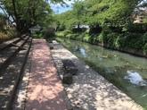 30年8月 川のはつらつプロジェクト①.JPG