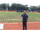 30年8月 校庭の芝生化①.JPG