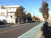 街路樹①.JPG