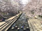 吹上地域の桜①.JPG