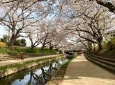 吹上地域の桜③.jpg